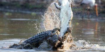 những sát thủ động vật ăn thịt đồng loại