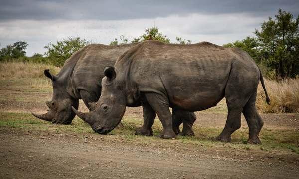 những sự thật thú vị về thế giới động vật